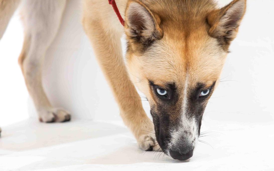 Sydney pet photographer, Sydney pet photography, dog photography, dog photographer, John Dowling, dog names, Sydney Pet Photos, action photography, rescue dog, Pet photography, Off-leash Dog Walking