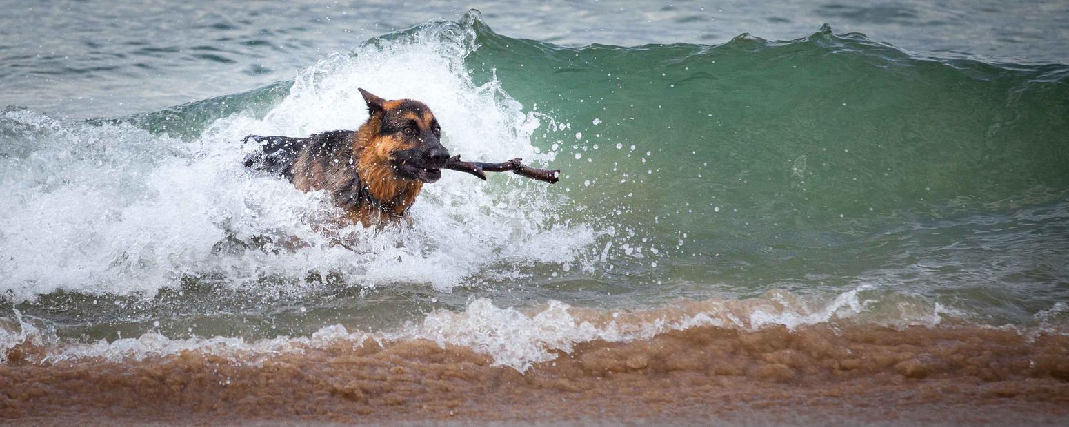 raw files, Sydney pet photographer, Sydney pet photography, dog photography, dog photographer, John Dowling, dog names, Sydney Pet Photos, action photography
