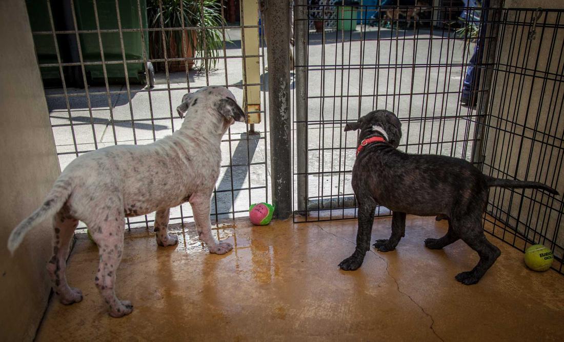 Sydney pet photographer, Sydney pet photography, dog photography, dog photographer, John Dowling, dog names, Sydney Pet Photos, action photography, rescue dog, Die