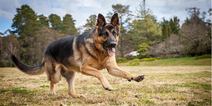Adopting a dog, Sydney pet photographer, Sydney pet photography, dog photography, dog photographer, John Dowling,dog names