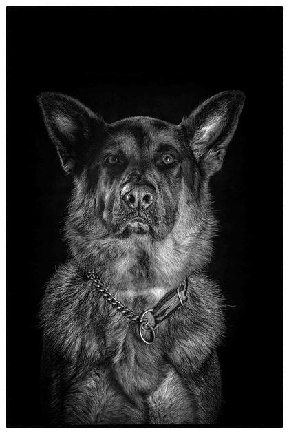 Sydney pet photographer, Sydney pet photography, dog photography, dog photographer, John Dowling,dog names, Sydney Pet Photos, Pet photo session