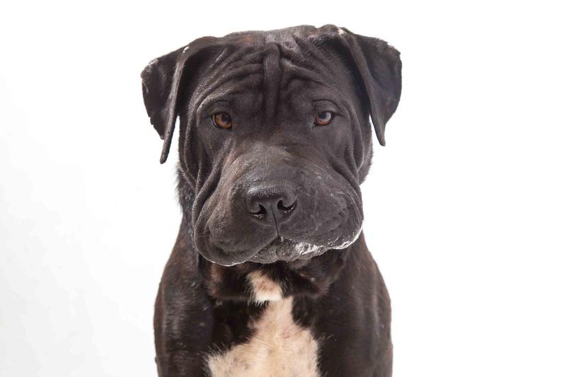 Sydney pet photographer, Sydney pet photography, dog photography, dog photographer, John Dowling, dog names, Sydney Pet Photos, action photography, rescue dog, pet photo session